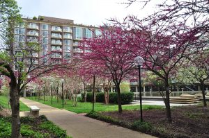 520 N St SW / Harbour Square